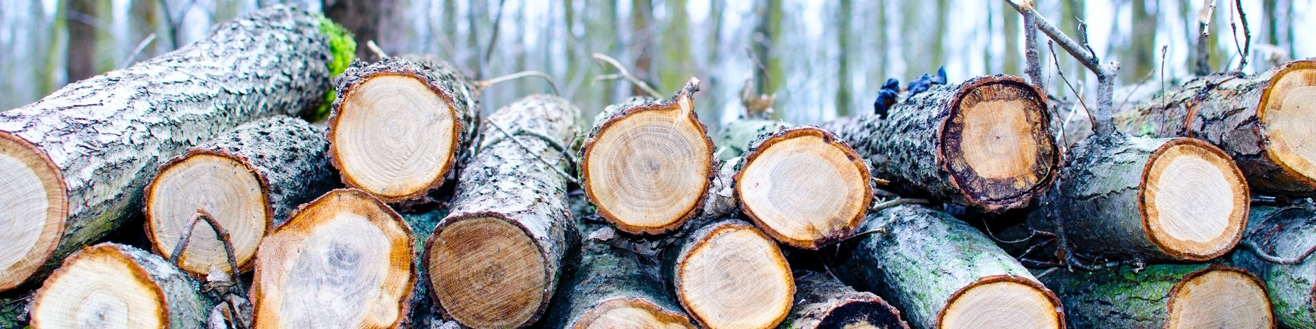 6 Important Reasons to Have Trees Professionally Cut Down